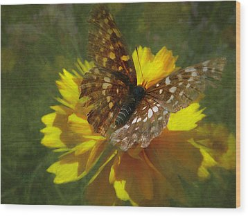 Tattered Wings Wood Print by Cindy Wright