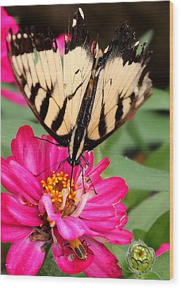 Wood Print featuring the photograph Tattered Wings Number Two by Paula Tohline Calhoun