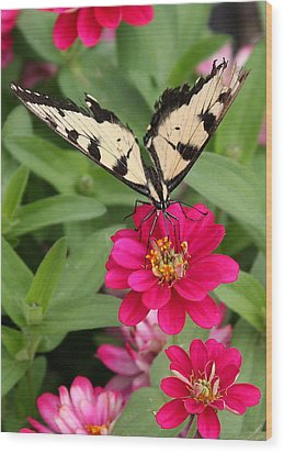 Wood Print featuring the photograph Tattered Wings by Paula Tohline Calhoun