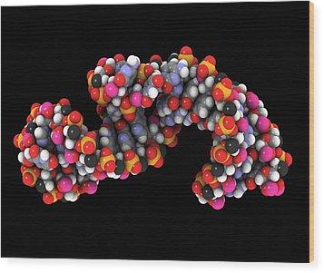 Telomerase Molecule, Artwork Wood Print by Laguna Design