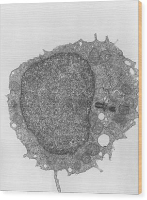 Tem Of Human Lymphocyte Blood Cell Wood Print by Dr Gopal Murti