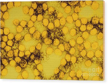 Tem Of Yellow Fever Viruses Wood Print by Science Source