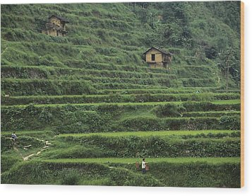 Terraces For Agriculture Wood Print by Raymond Gehman