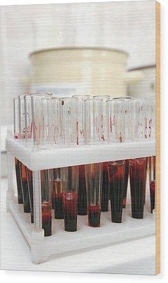 Test Tubes In A Public Health Lab Wood Print by Ria Novosti