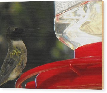 Texas Hummingbird Wood Print by Rebecca Cearley