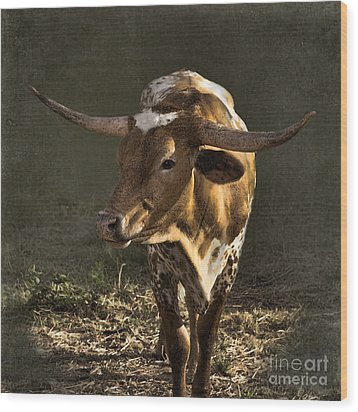 Texas Longhorn # 4 Wood Print by Betty LaRue