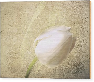 Textured Tulip Wood Print by Fiona Messenger