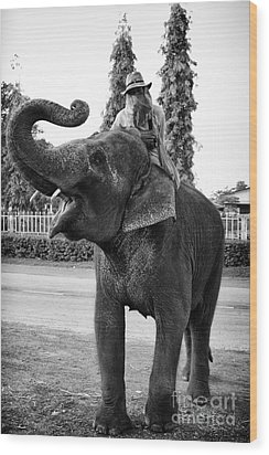 Thai Elephant Roar Wood Print