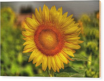 Thai Sunflower Wood Print by Adrian Evans