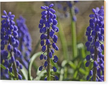 That Purple Herb Wood Print by Lawrence Ott