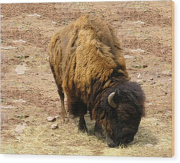 The American Buffalo Wood Print by Bill Cannon