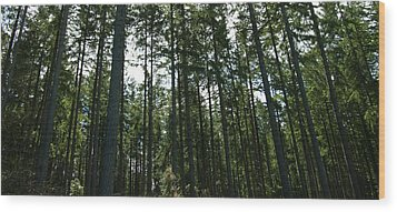 The Back Forty Wood Print by Travis Crockart