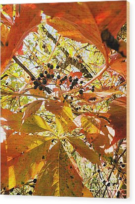 The Beauty In Dying Wood Print by Trish Hale