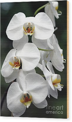 The Beauty Of Orchids  Wood Print