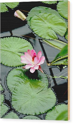 The Beauty Of Water Lily Wood Print