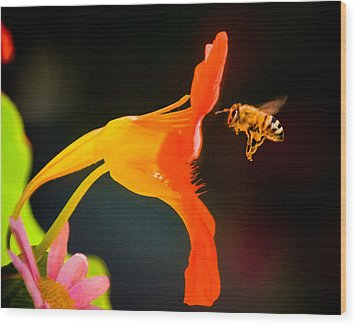 The Bee Wood Print by Mickey Clausen