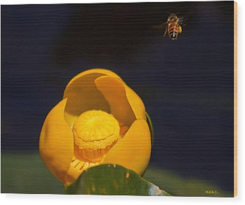 The Bee Wood Print by Mitch Shindelbower