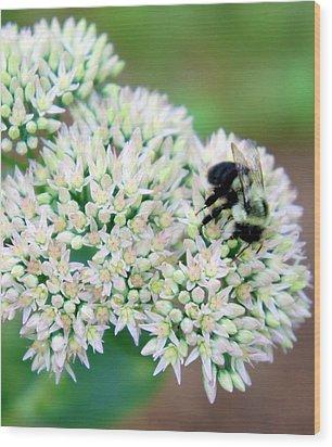 The Bees Knees Wood Print