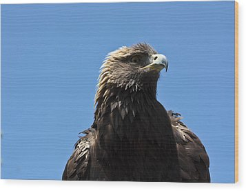 Wood Print featuring the photograph The Big Bird by Nick Mares