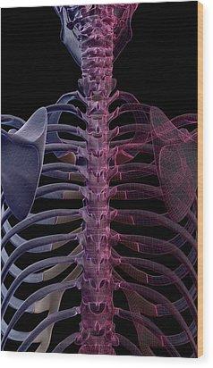 The Bones Of The Upper Body Wood Print by MedicalRF.com