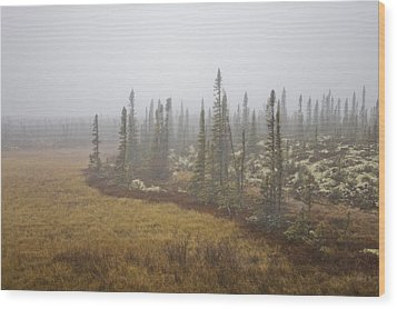 The Boreal Forest On A Foggy Day Wood Print by Taylor S. Kennedy