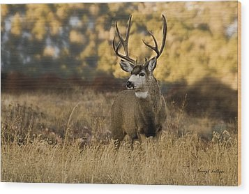 The Buck Stops Here Wood Print by Darryl Gallegos