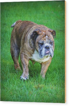 The Bulldog Shuffle Wood Print by Jeanette C Landstrom