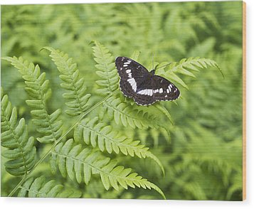 Wood Print featuring the photograph The Butterfly On Fern Sheet by Aleksandr Volkov