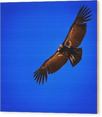 The California Condor Wood Print