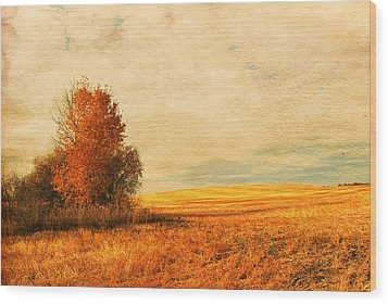 The Careful Breeze  Wood Print by Jerry Cordeiro