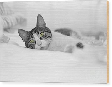 The Cat  Wood Print by Zafer GUDER