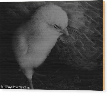The Chick Wood Print by Heather  Boyd