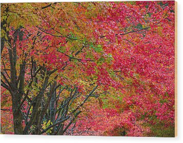 The Color Of Fall Wood Print by Ken Stanback