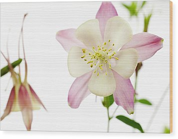 The Columbine Wood Print by Brad Rickerby