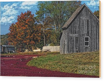 The Cranberry Farm Wood Print by Gina Cormier