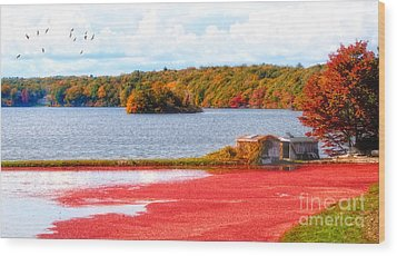 The Cranberry Farms Of Cape Cod Wood Print by Gina Cormier