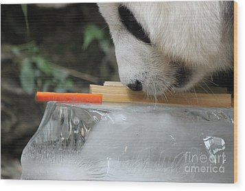 Wood Print featuring the photograph The Curiosity Of Orange #1 by Nola Lee Kelsey