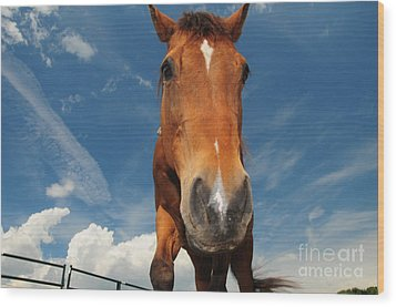 The Curious Horse Wood Print by Paul Ward
