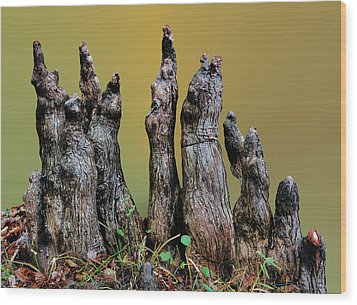 The Cypress Knees Chorus Wood Print by Kristin Elmquist