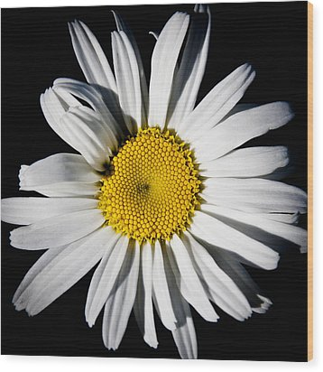 The Daisy Wood Print by David Patterson