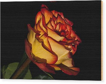 The Deepness Of A Rose 1 Wood Print by Douglas Barnett