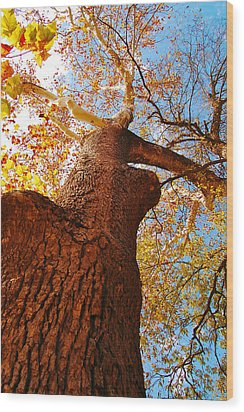 Wood Print featuring the photograph The Deer  Autumn Leaves Tree by Peggy Franz