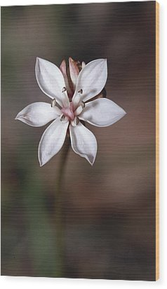 The Delicate Pastel Pink Flower Wood Print by Jason Edwards