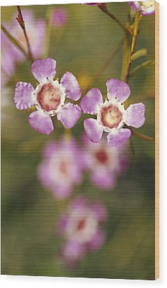 The Delicate Pink Petals Wood Print by Jason Edwards