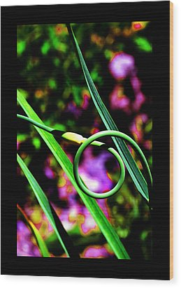 Wood Print featuring the photograph The Divine Cosmos Of Garlic by Susanne Still