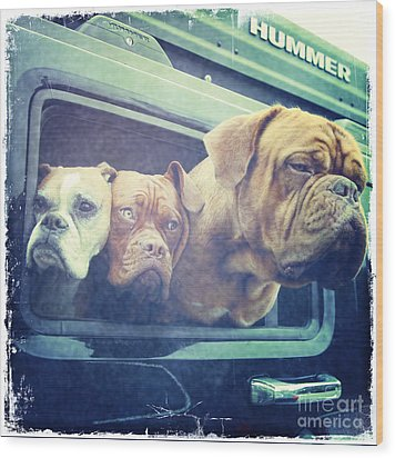 The Dog Taxi Is A Hummer Wood Print