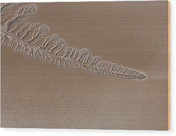 The Dry Colorado River Delta Stands Wood Print by Pete Mcbride