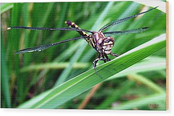 Wood Print featuring the photograph The Face Of A Dragonfly 02 by George Bostian