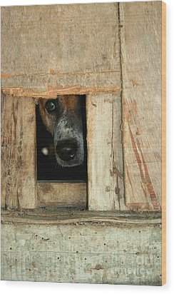The Face Of Hoarding Wood Print by Nola Lee Kelsey