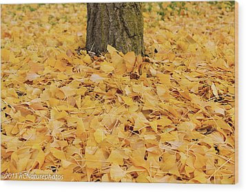 Wood Print featuring the photograph The Fall Of Ginkgo by Rachel Cohen
